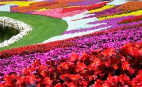 Epcot International Flowers & Garden Festival – Epcot